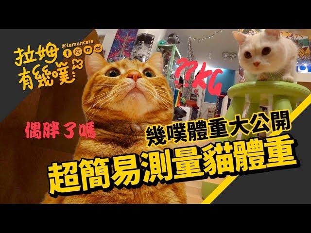 ►拉姆有幾噗◄ 簡易測量貓咪體重 幾噗體重大公開┃Did you weigh your cats today? ♤