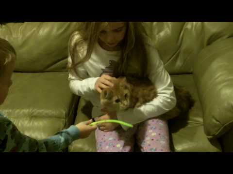 Kids Find Out Santa Brought Them a Cat for Christmas