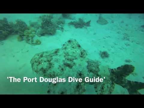 Port Douglas Dive Guide