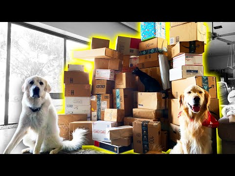 OUR BIGGEST PO BOX OPENING YET (Super Cooper Sunday #228)