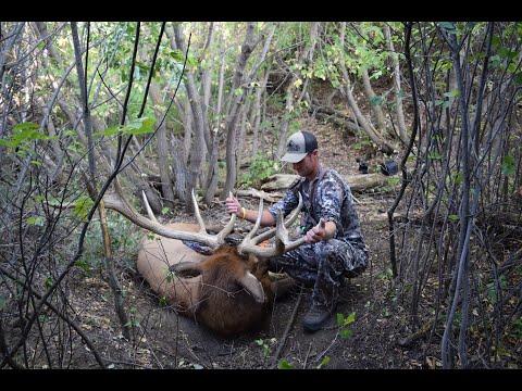 Bowhunting Giant Mule Deer In Southern Alberta With A Bonus  Archery Bull Elk