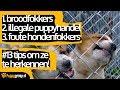 Broodfokkers, illegale puppyhandel en foute hondenfokkers: 13 tips om ze te herkennen! (VIDEO #15)