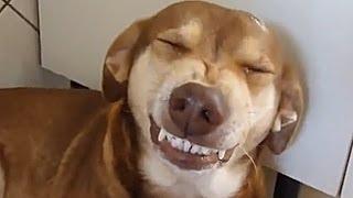 Cachorro falante - Ninão se recusa a pagar pensão