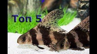 ТОП 5 рыб лучших рыб уборщиков