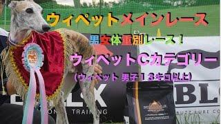 ウィペット メイン 男女体重別レース! ウィペットCカテゴリー(ウィペ...