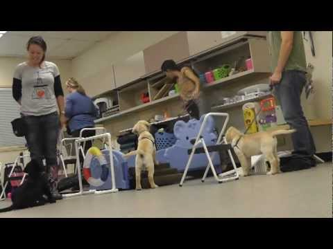 BUCS Puppy Training Class