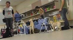 BUCS Puppy Training Class