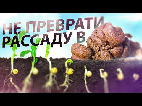 Вопрос: Почему не всходят проклюнувшиеся семена?