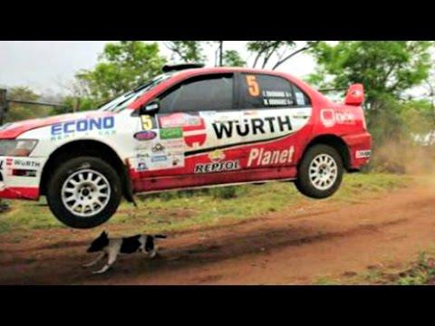 El perro más afortunado del mundo hace de escape milagro como coche de rally