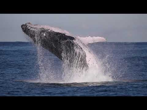 Whale Watching Sydney - 2019 Highlights