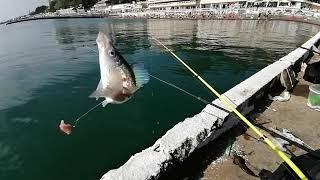 Рыбалка на Чёрном море с берега Окунь смарида