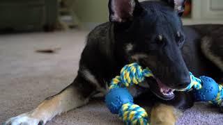 Meet my NEW dog! *RESCUE DOG*