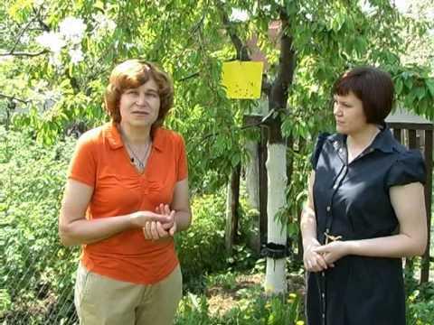 Как защитить свой сад. Тетянини садиба 2011