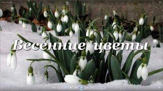 Распускающиеся цветы 5 Весенние цветы.Футажи для видеомонтажа.Скачать бесплатно.(Подпишись на мой канал!http://www.youtube.com/user/Surkovanatalia http://youtu.be/4AM6rXg66Eg Распускающиееся цветы 5 Весенние цветы.Футажи..., 2015-03-18T12:52:11.000Z)
