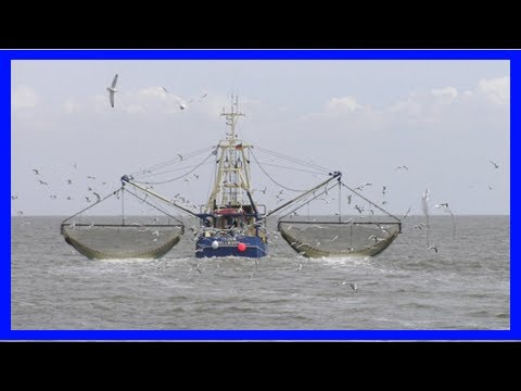 [Holland News] Dutch trawler fleet reacts strongly to ban on fishing in british waters - dutchnews.