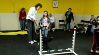 Agility Classes At Club Barks, West Paterson, Nj