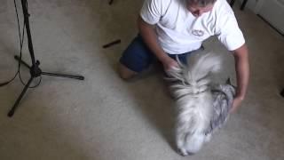 How to Remove Cat Fur Mats thumbnail