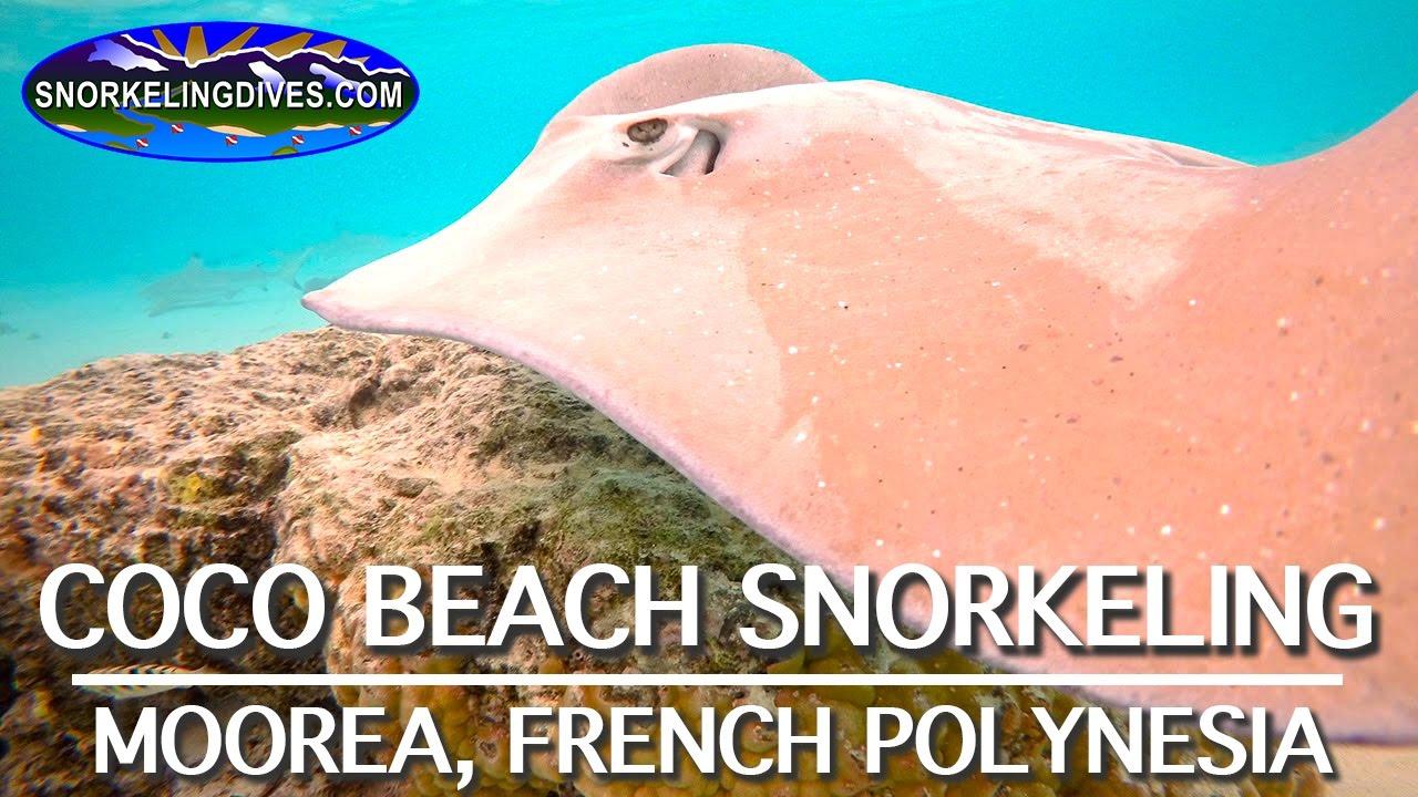 Coco Beach Snorkeling Moorea You
