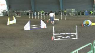 Jester Cocker Spaniel Open Standard Agility - 9-21-12 Santa Rosa - 1st Place