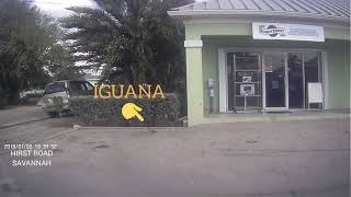 Iguana: Sale Shopping