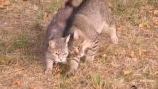 True friendship of two cats: first part