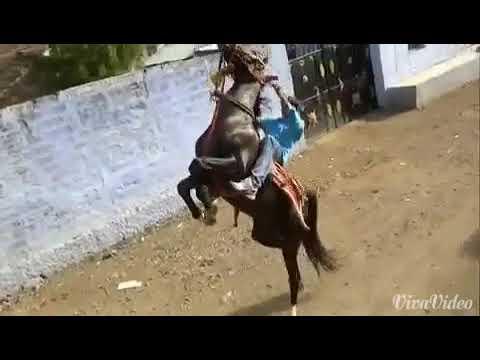 Amuche daivat Chatrapati, jai shivray