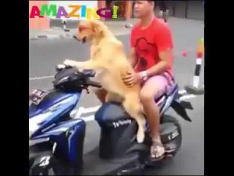 Amazing videos of the world 2016