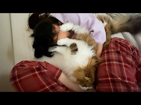 GWの朝起きない家族を幸せに起こす猫