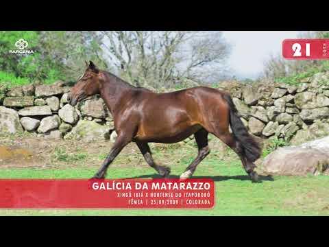 Lote 23- Galícia da Matarazzo