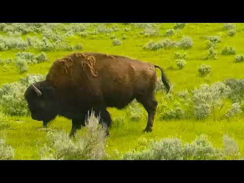 Joey's Trip to Little Bighorn National Park and Yellowstone National Park