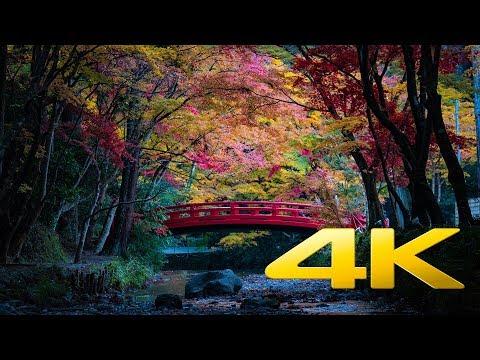 Okuni Shrine - Shizuoka - 小國神社 - 4K Ultra HD