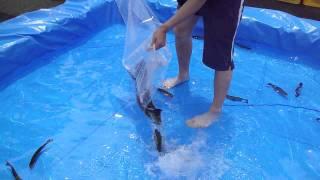 準備=楽しい魚すくい thumbnail