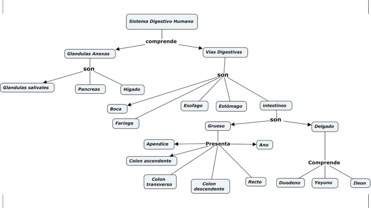 Dorable Sistema Digestivo Diagrama Galería - Anatomía de Las ...