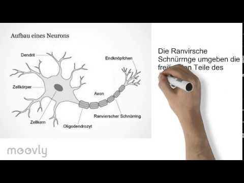 Anatomie einer Nervenzelle - YouTube