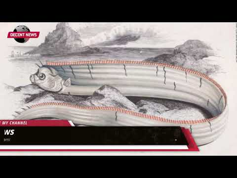 Sightings Of Rare Oarfish In Japan Raise Fears Of Earthquake And Tsunami I DECENT NEWS I