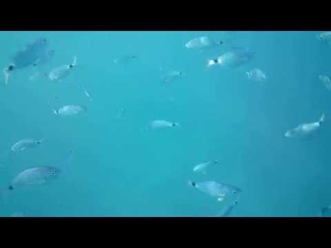 Fishies in Croatia