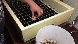 Инкубатор Золушка 98 яиц