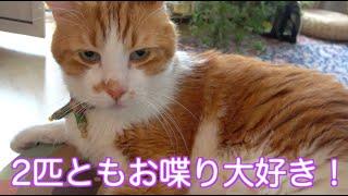 可愛い!マーキングしたかったのに◯しっこ漏らしちゃった猫!必死で隠す