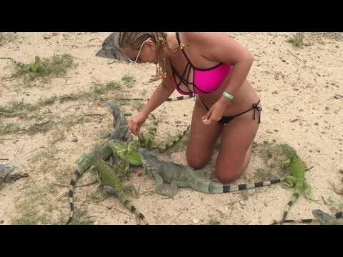 The Flight Attendant Life | Making friends with the Iguanas in St. Martin