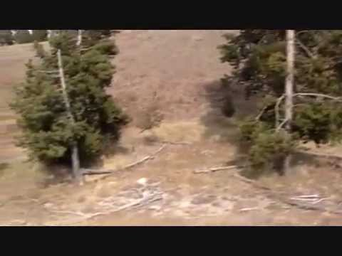 Yellowstone Bison - The Thundering Herd - Flyline Search Marketing.wmv