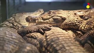 Telewizja Aleksandrów: Zoo Safari w Borysewie. Witamy wiosnę