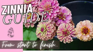 Growing Zinnias from Seed Cut Flower Farm Gardening Garden How to Grow 🌱🌱💚💚