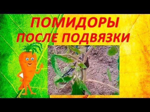 Редактор видео на русском языке – Movavi Editor