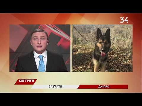 34 телеканал: В Днепре собака Ника нашла 44 пакетика с метамфитамином