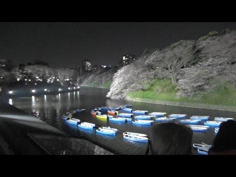 【Tokyo Sightseeing#13】Cherry blossoms of Yasukuni Shrine, Chidorigafuchi 2016/Chiyoda-ku, Tokyo