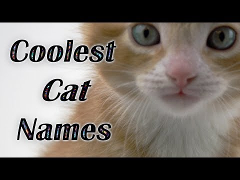 💕BEST CAT NAMES Coolest Kitten Names (Watch Cute Kitties) VOTE FOR YOUR FAVORITE CAT NAME ⭐