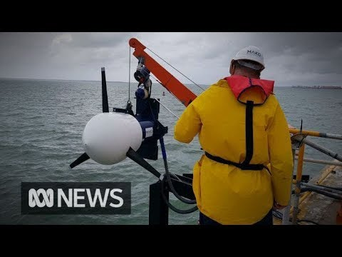 The rise of tidal energy in Australia | ABC News