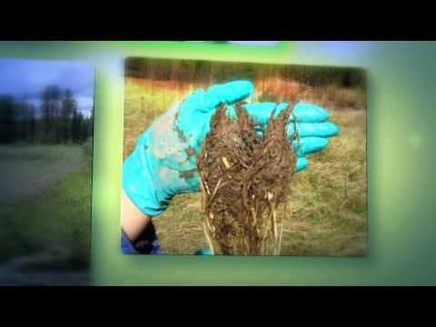 Phytoremediation of Petroleum Hydrocarbons - Business