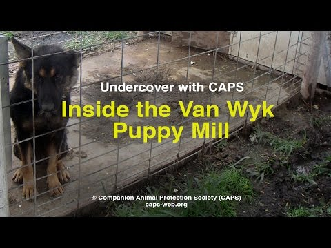 Undercover with CAPS: Inside the Van Wyk Puppy Mill