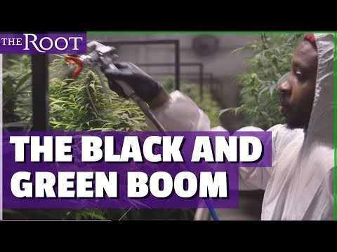 This Weed Cultivates Black Entrepreneurs